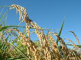自社にて農産物検査